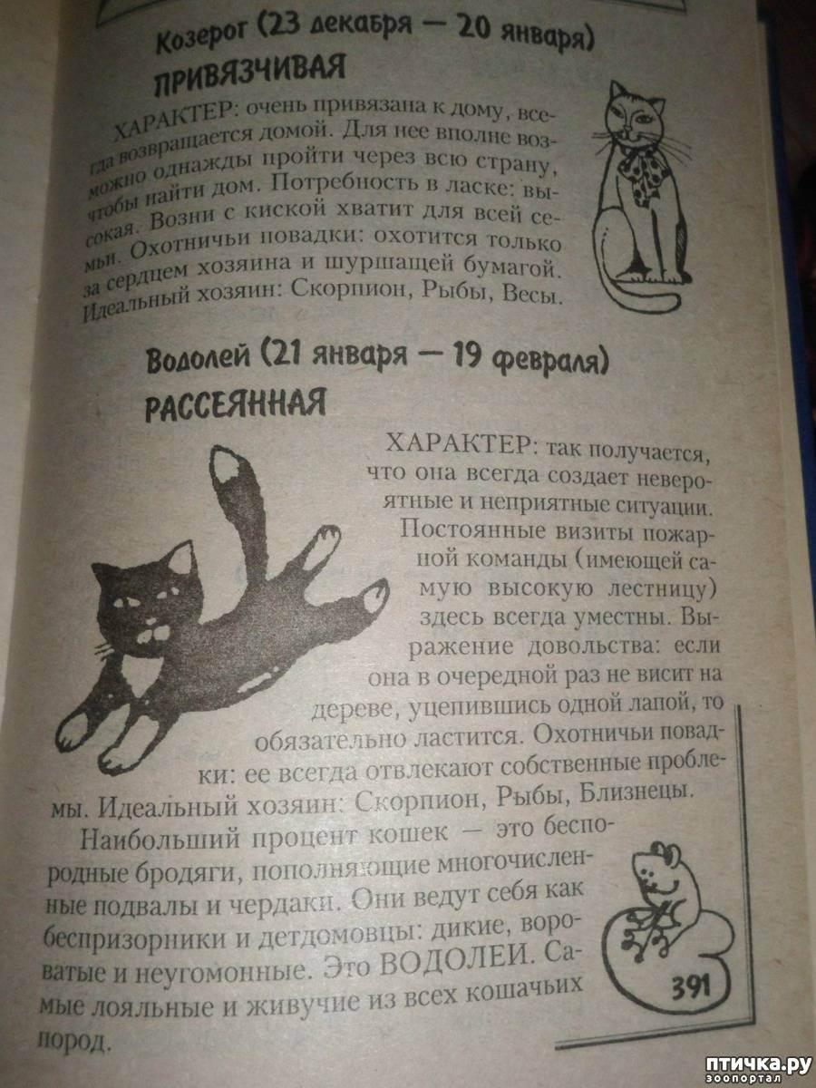 Кошачий гороскоп