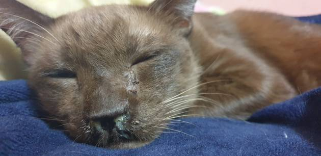 Кошка чихает чем лечить в домашних условиях - муркин дом