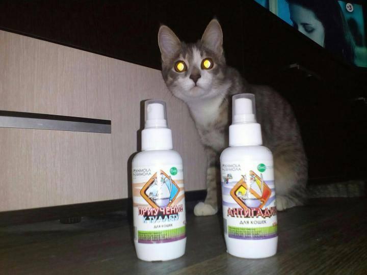 Антигадин для кошек: инструкция по применению, отзывы