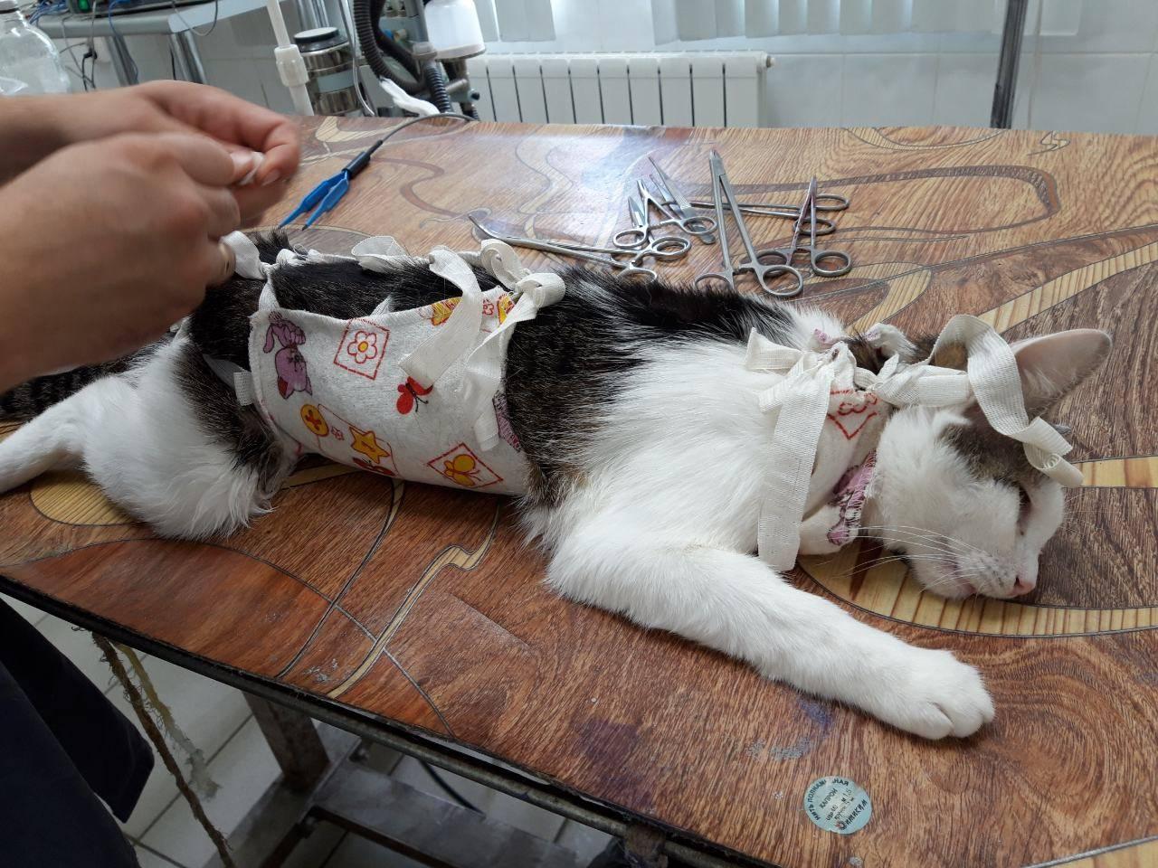 Стерилизация кошки: что это такое, с какого возраста проводят операцию, какие плюсы и минусы есть у стерилизации