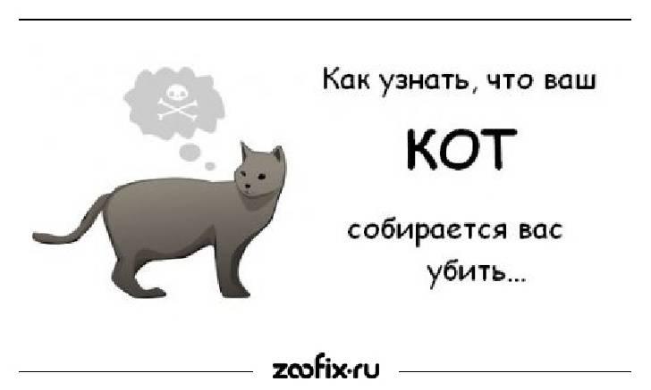 Почему у кошки 9 жизней: мифы, сказания и реальность