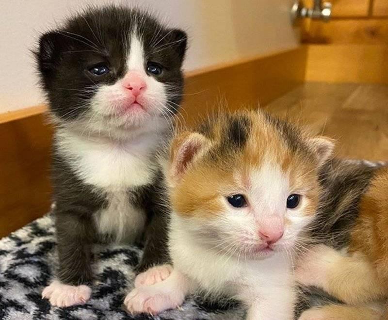 Когда у котят открываются глаза - зависит от породы