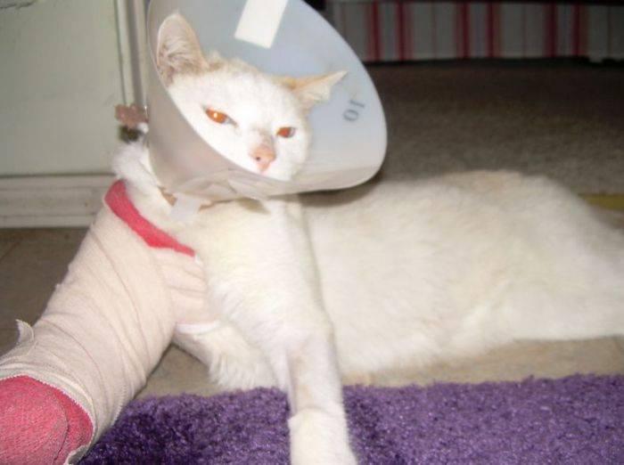 Что делать если кот сломал лапу