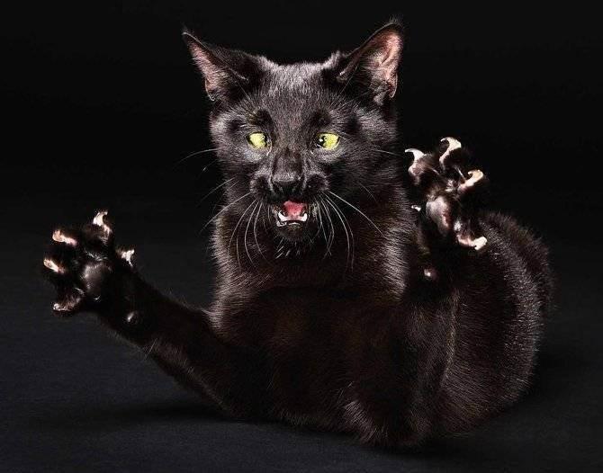 Топ 3 основных причин: почему котенок кусается и царапается?