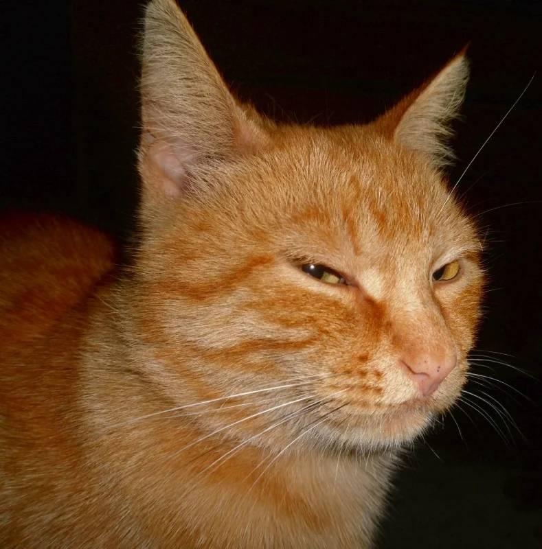Глаза кошки: проблемы и решения