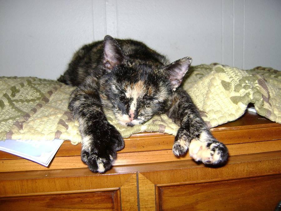Кота вырвало желчью: причины рвоты, способы оказания первой помощи, меры профилактики