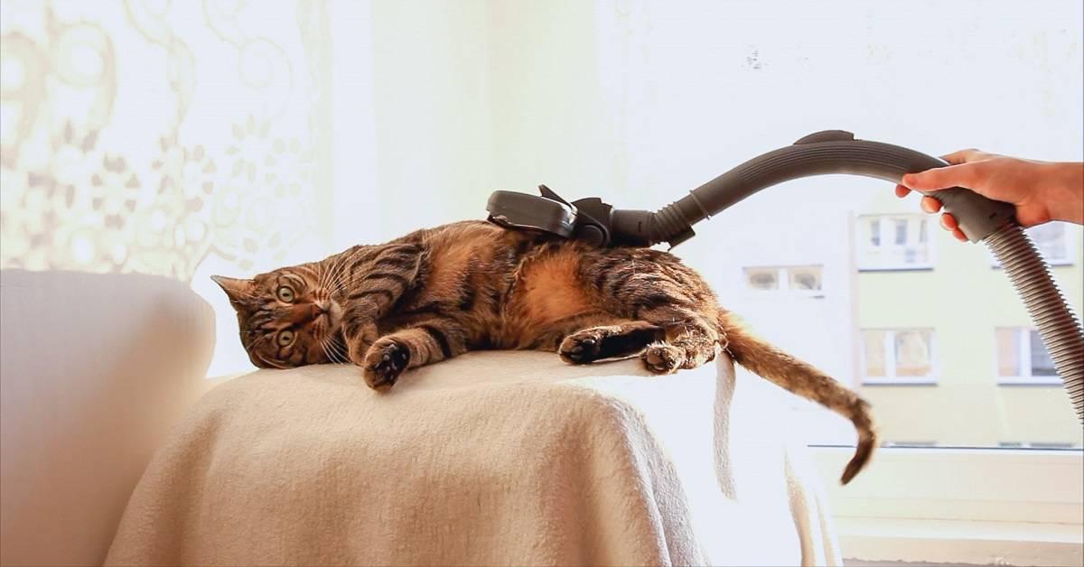 5 причин почему кошка боится чужих людей 5 причин почему кошка боится чужих людей