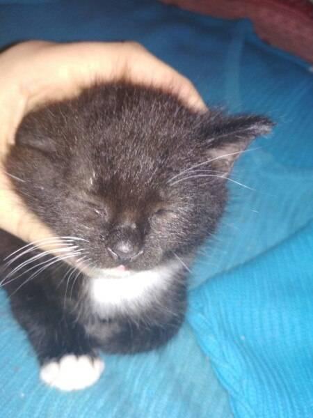 Почему у кошки выпадают усы: причины и что делать, могут ли они выпадать просто так?
