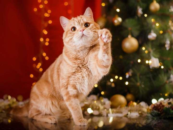 Кот съел дождик с елки: что делать и нужно ли беспокоиться