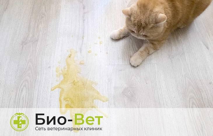 Почему кота рвет желтой жидкостью