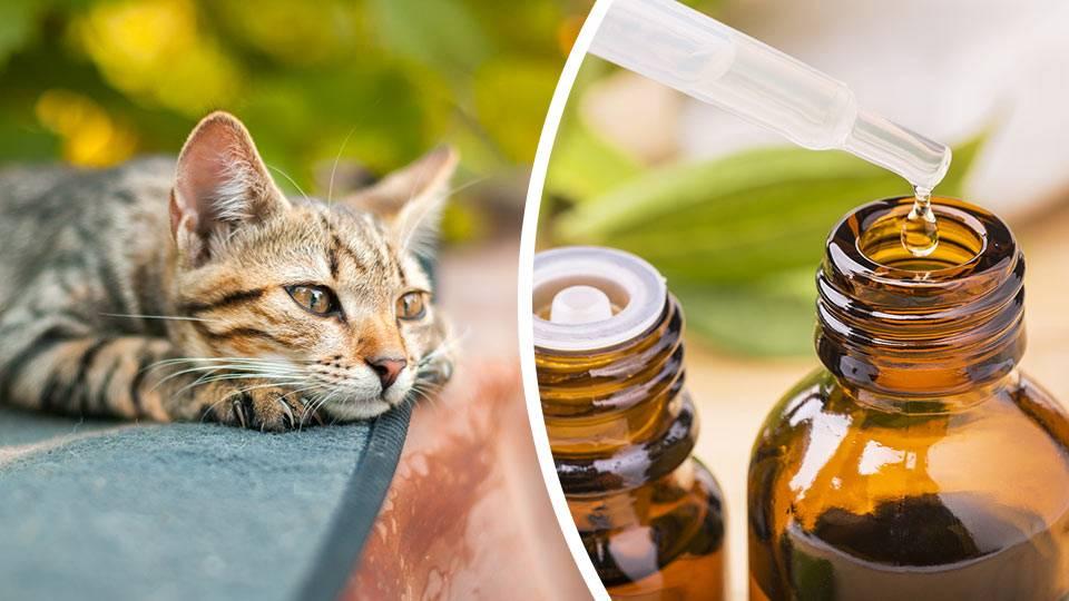 Как отучить кошек портить мебель, а также комнатные и огородные растения с помощью запахов