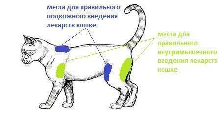 Как делать уколы котам самостоятельно