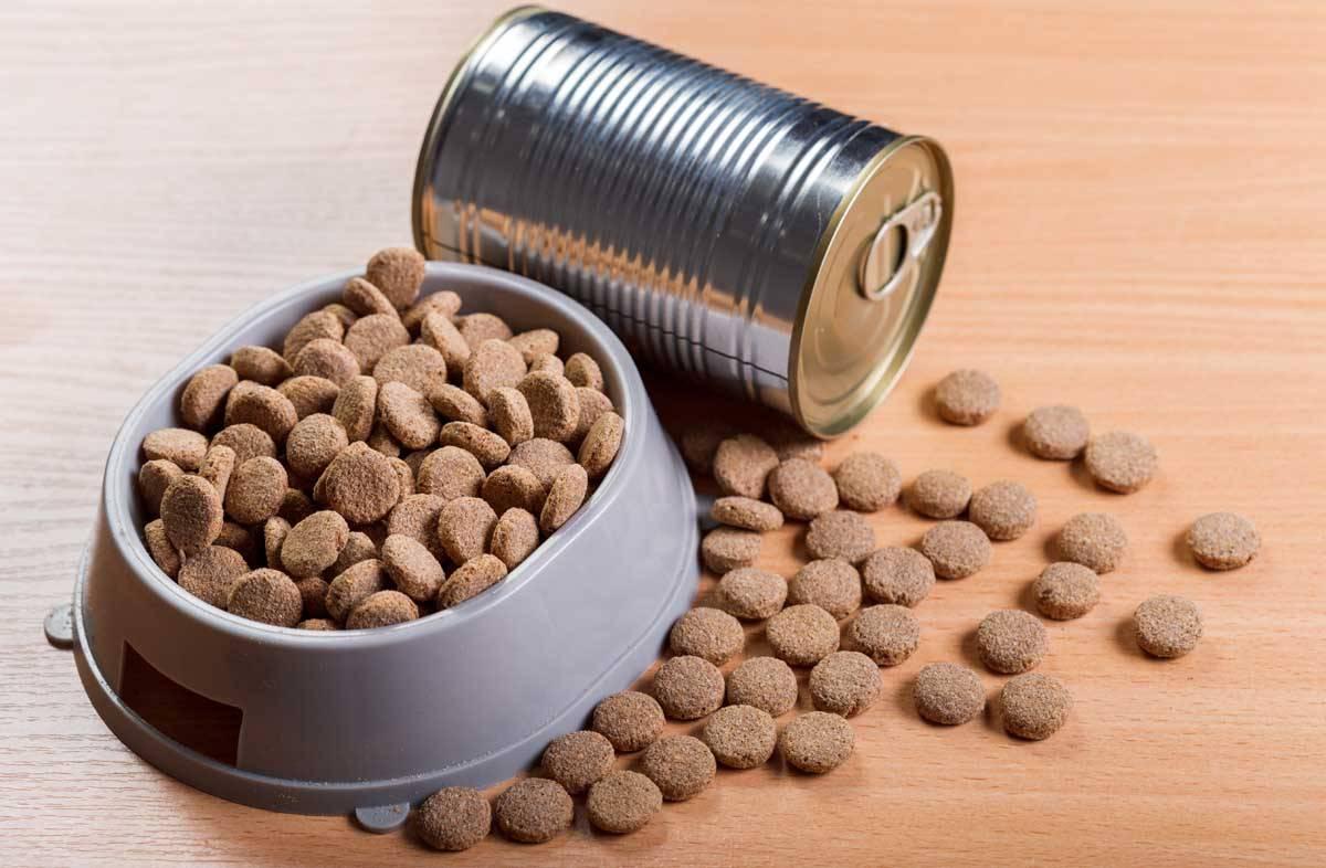 Вред кормов для кошек: вреден ли сухой корм