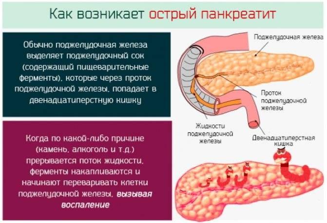 Воспаление поджелудочной железы у кошек: причины и способы терапии