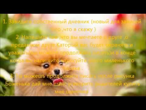 Как убедить родителей завести собаку - wikihow