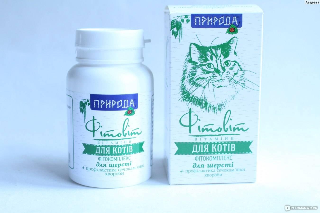 Лекарство порошок ветом 1.1 для кошек и собак инструкция для применения ветома 3 2 в ветеринарии дозировки как разводить и давать правила как принимать плюсы и минусы ветома 11
