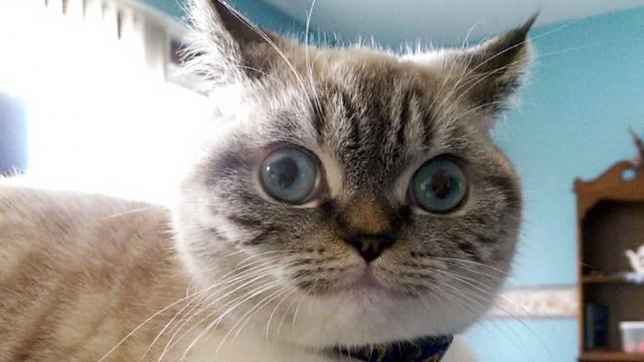 У кота стали косить глаза причины