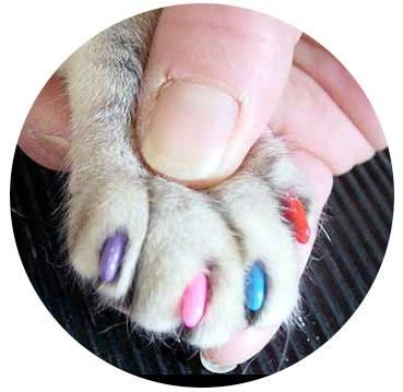 ᐉ сколько пальцев у кошки на передних и задних лапах: полидактия и интересные факты - kcc-zoo.ru