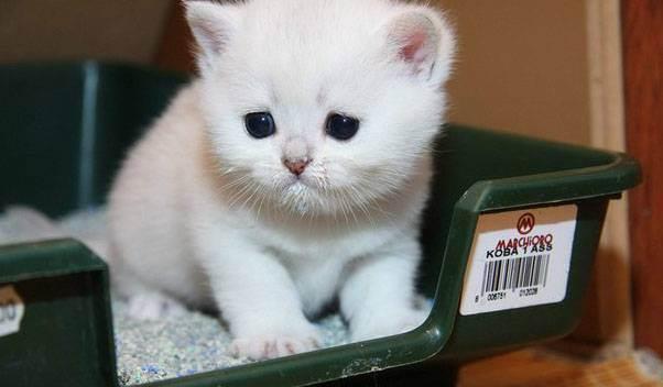 Что можно сделать в домашних условиях при запоре у кота