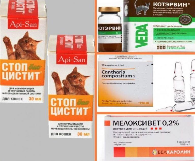 """""""канефрон"""" для кошек: инструкция по применению, дозировка и отзывы"""