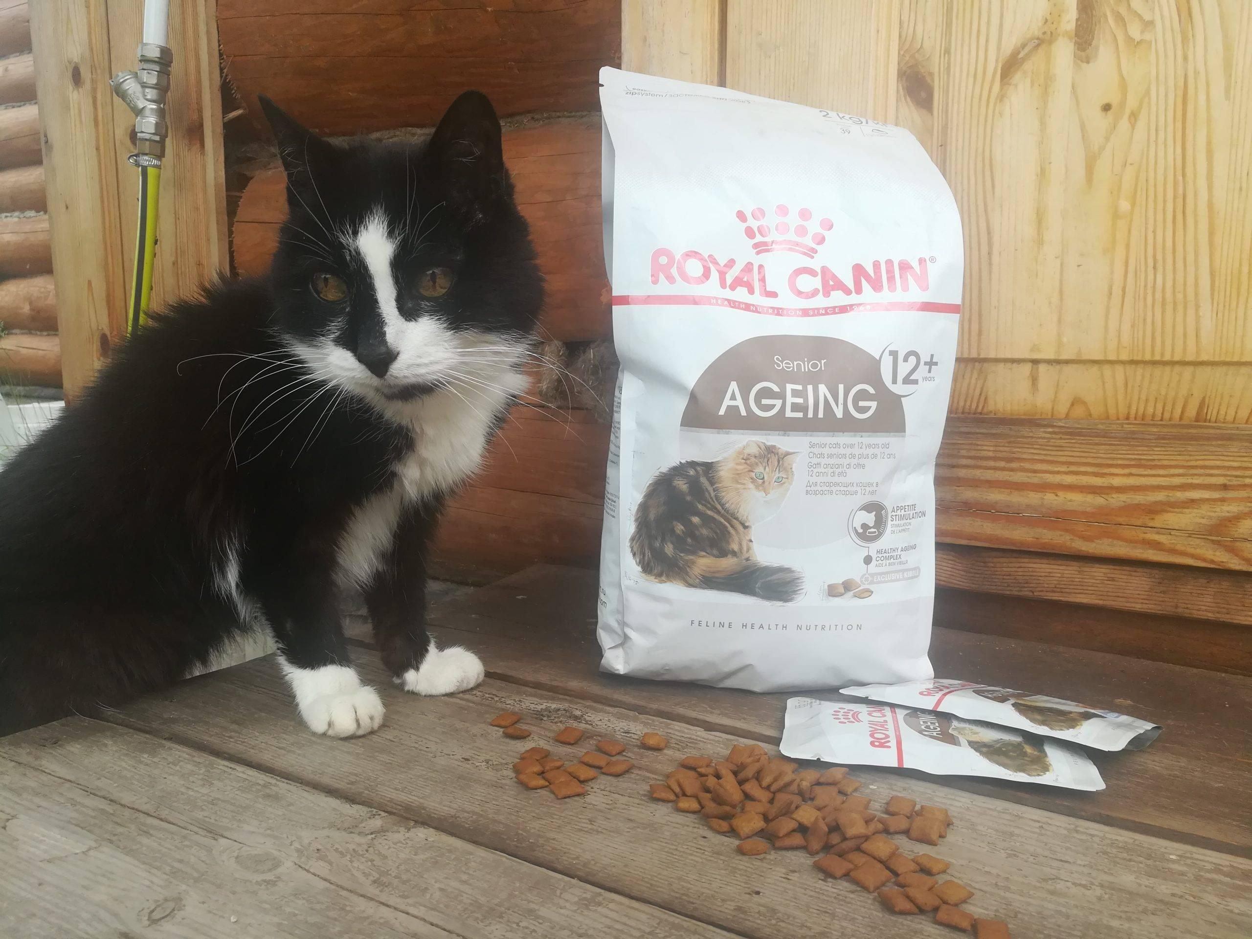 10 лучших сухих кормов для кошек – рейтинг 2020 года
