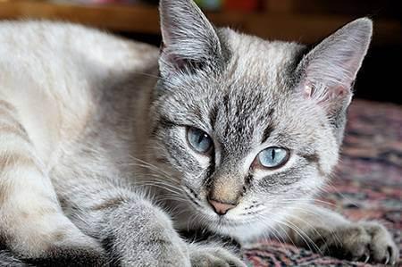 Как понять, что кошка заболела: признаки и симптомы