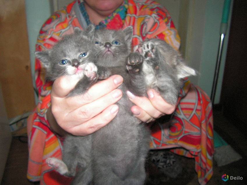 Развитие котят по неделям и месяцам. возраст котенка, этапы развития