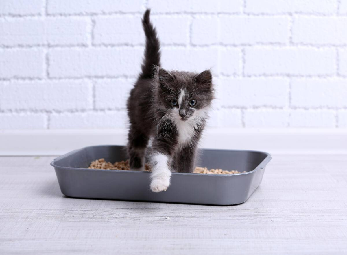 Кошка перестала ходить в лоток. что делать? | кот в окошке