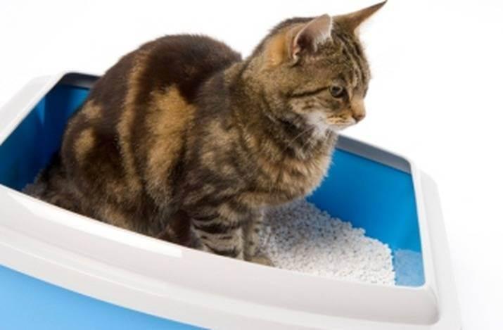 Симптомы мочекаменной болезни у котов и кошек, лечение в домашних условиях, профилактика уролитиаза