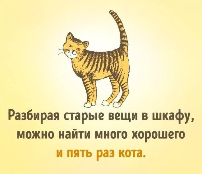 На какой день течки нужно вязать кошку