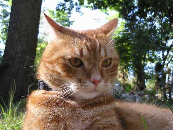 У котенка запах изо рта: причины, возможные заболевания и советы ветеринаров
