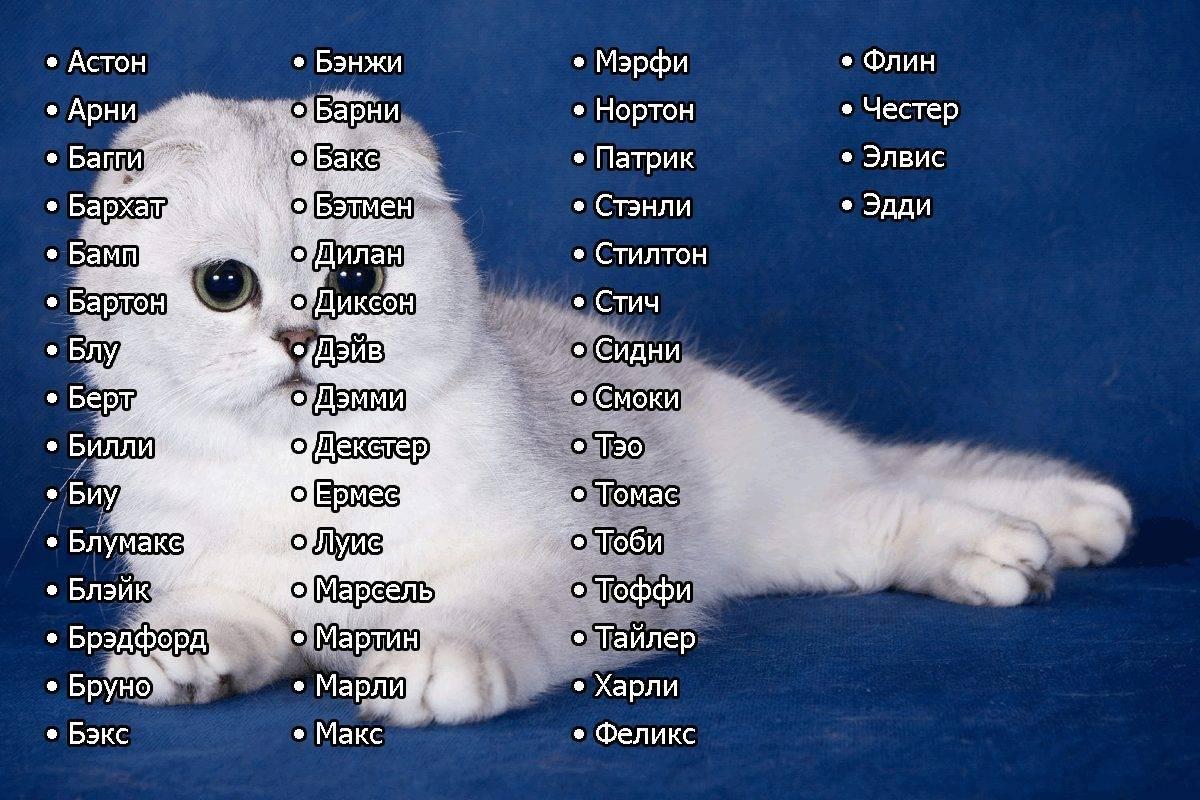 Популярные японские имена для котов