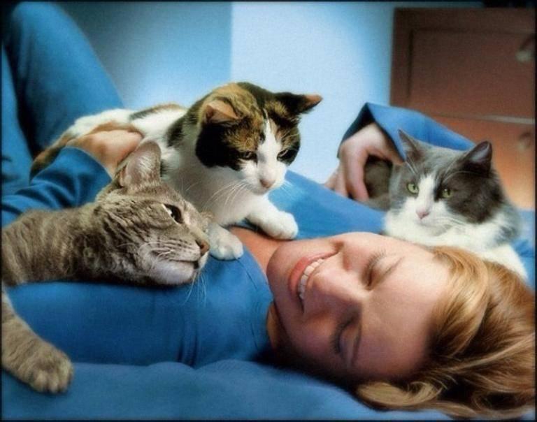 Почему кошка ложится на человека?