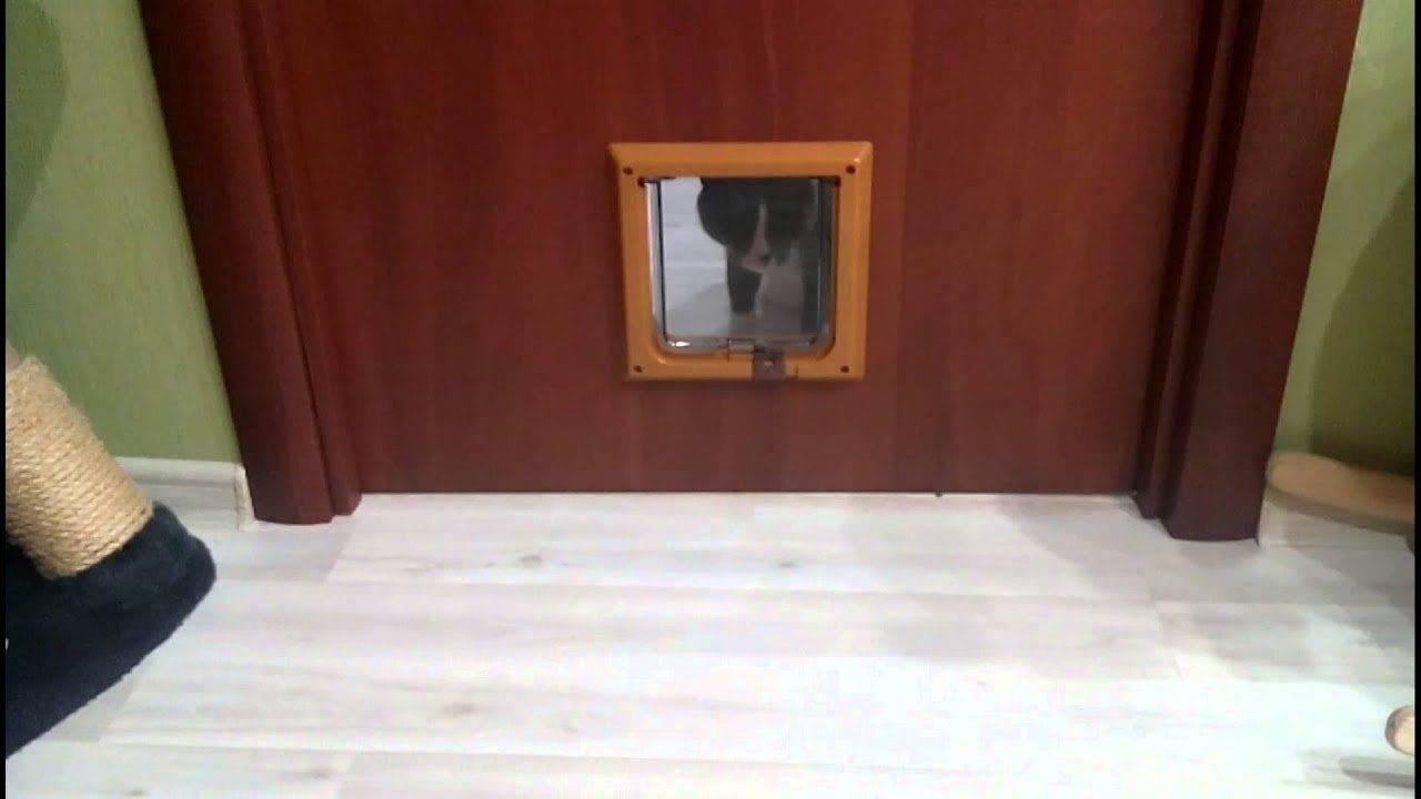 Как сделать дверцу для кошки своими руками: особенности применения аксессуара