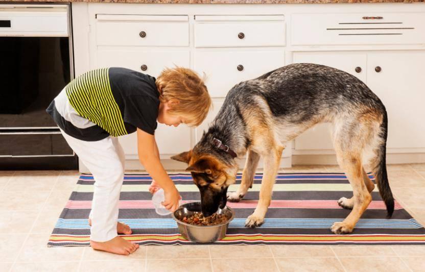Как купать немецкую овчарку, с какого возраста и как часто можно мыть собаку
