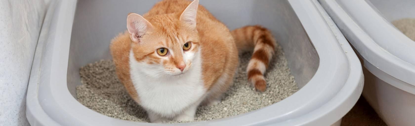 Другой цвет мочи у кошек (коричневый, красный, розовый) - симптомы, лечение, препараты, причины появления | наши лучшие друзья