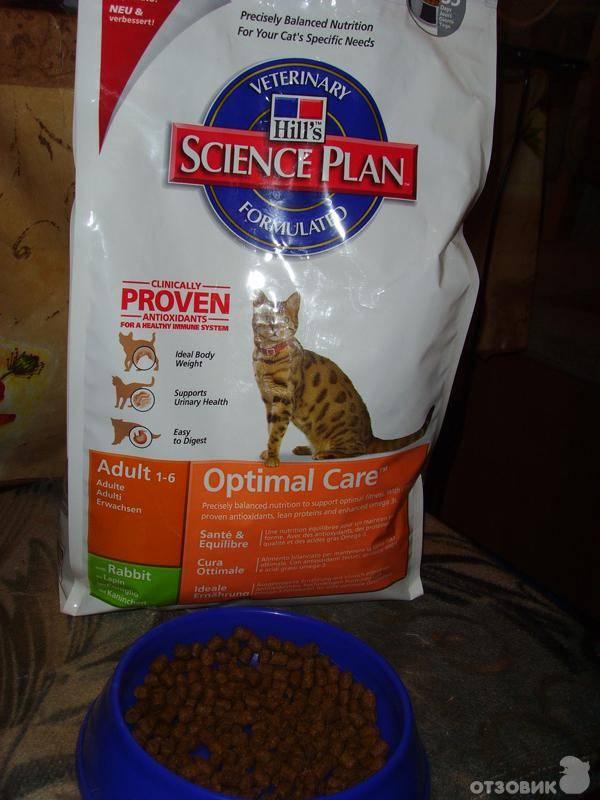 15 лучших кормов для кошек