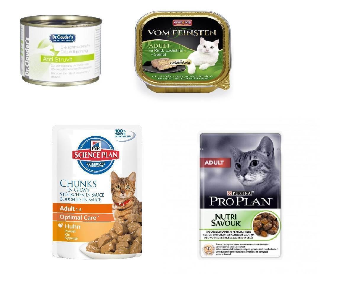 Влажные корма для кошек: обзор популярных марок