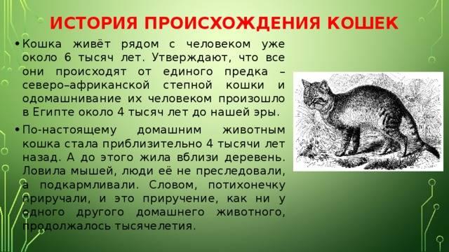 Откуда появились и от кого произошли кошки