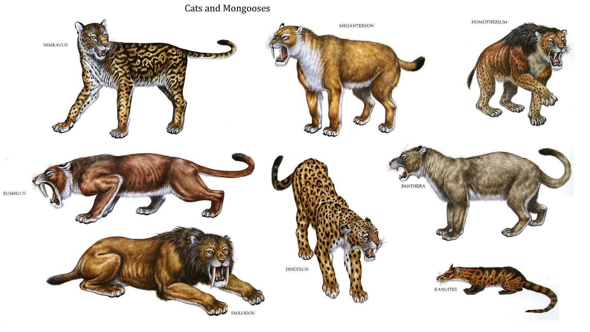 Семейство кошачьих: фото с названиями представителей, разновидности хищников