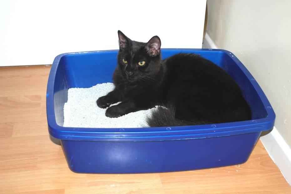Способы приучить котенка к лотку с наполнителем