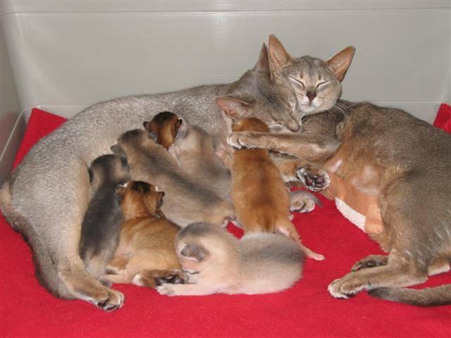 Как ухаживать за котятами от 1-го месяца