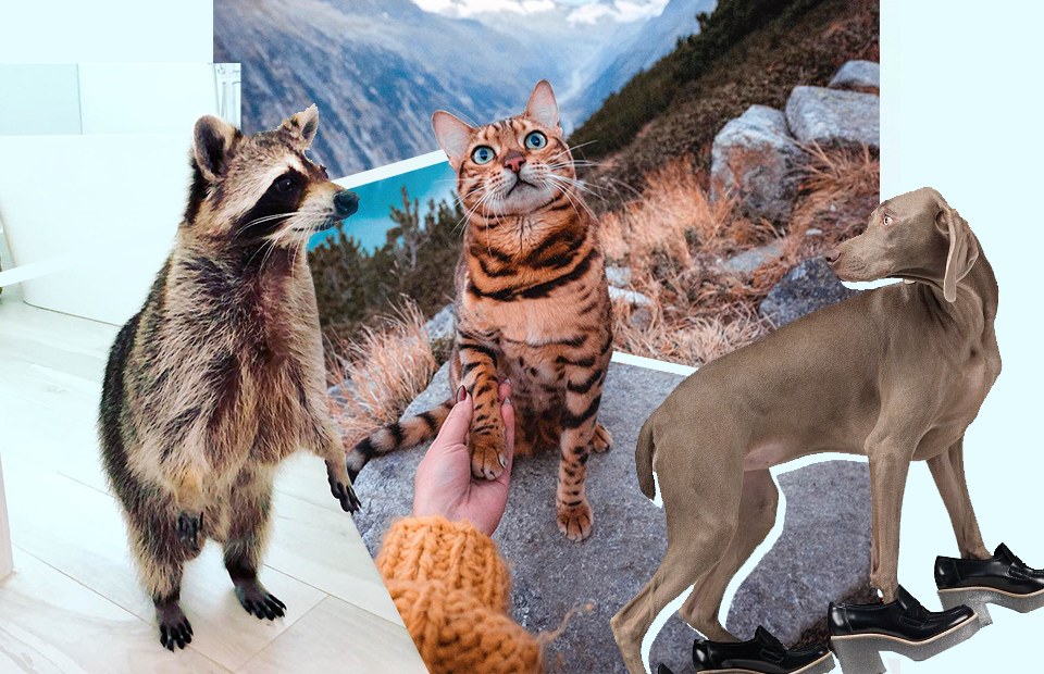 Кошки в нашем мире кто они