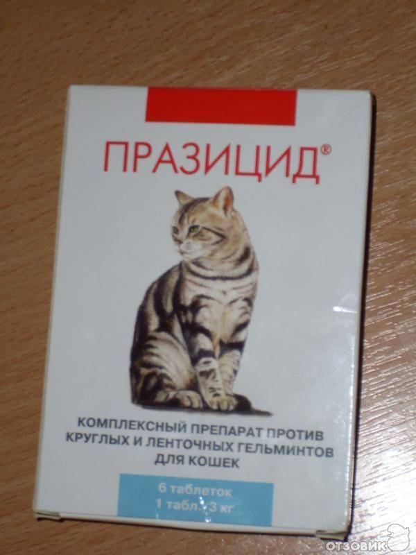 Празицид – таблетки для кошек и котят: инструкция и отзывы.