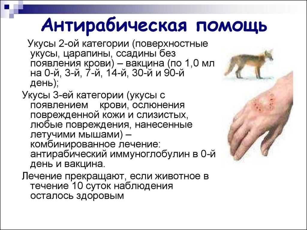 Укус домашней кошки чем лечить