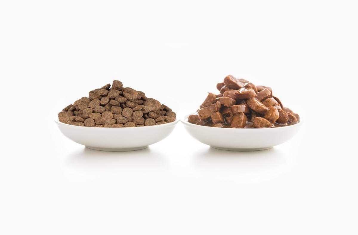 Влажный или сухой корм для кошек: каким лучше кормить? достоинства и недостатки кормов, их состав