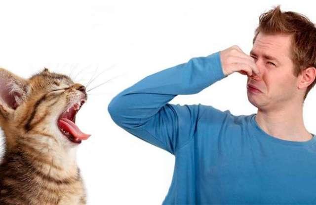 Запах изо рта у кошки: причины, профилактика, лечение | ветеринарная служба владимирской области