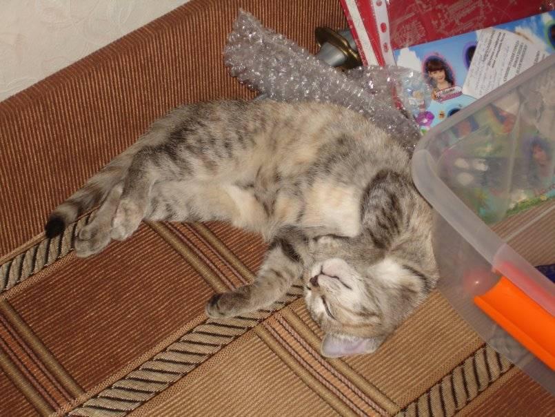 Анемия у кошек - первые признаки, особенности проявления и советы по выбору метода лечения (видео + 90 фото)