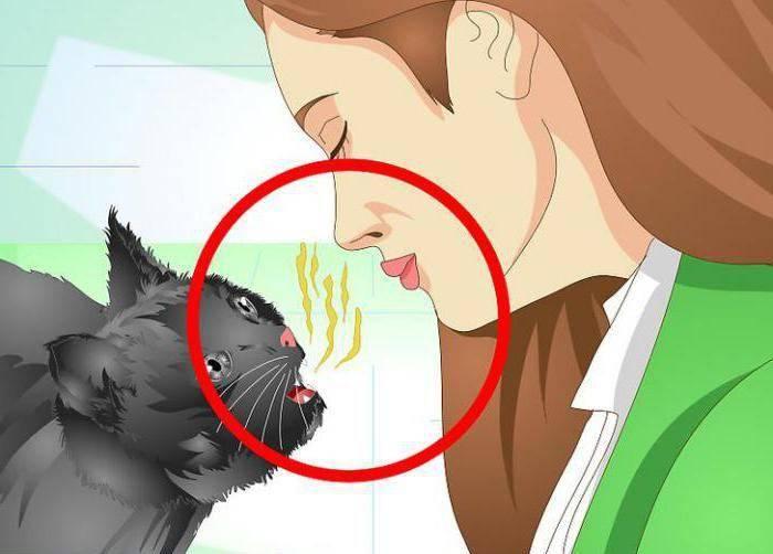 Кошка потеряла голос и охрипла