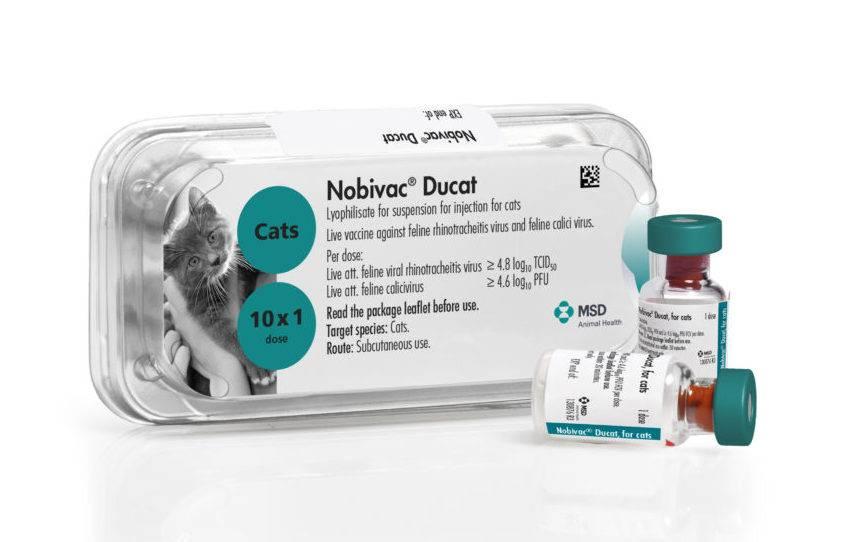 Вакцина для кошек нобивак, защита от серьезных заболеваний